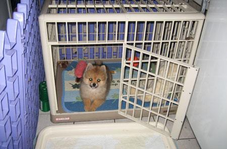 狗狗关笼子好不好